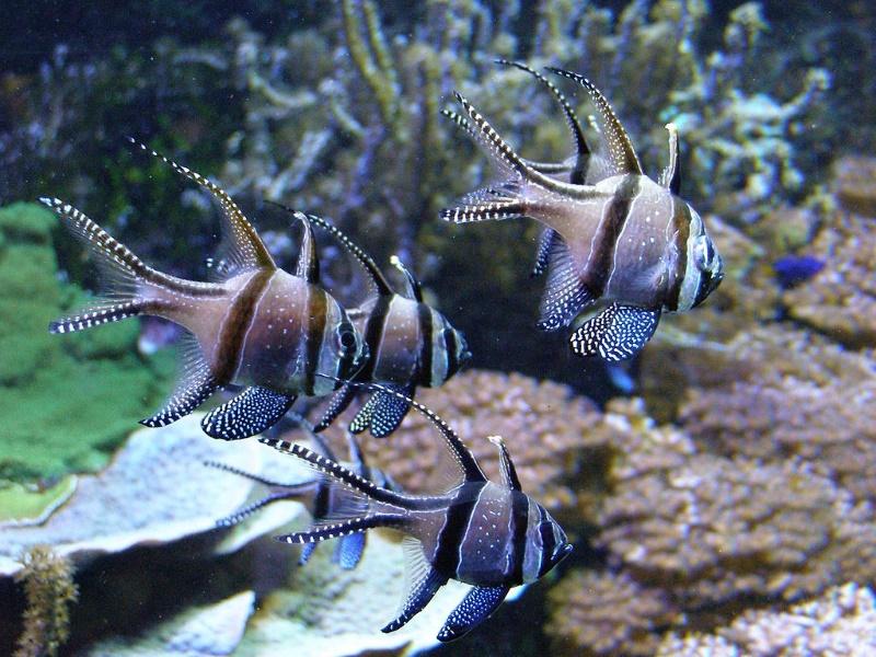 aquarium genua