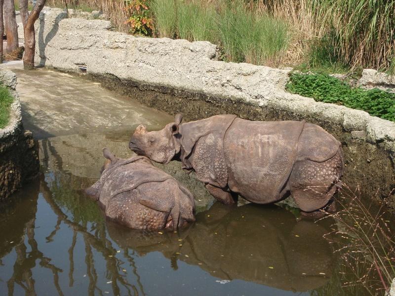 basel dierentuin