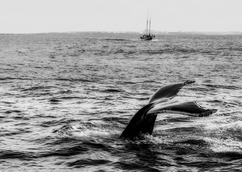walviskijken ijsland