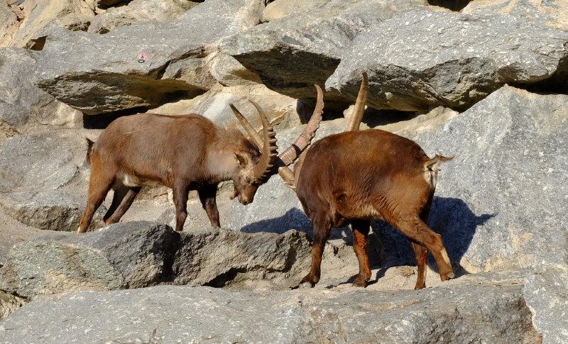 Alpine Zoo